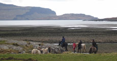 Trips and tours on Mull including wildlife, walking, boat and whale watching