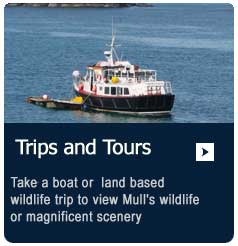 Take a boat or wildlife trip or tour