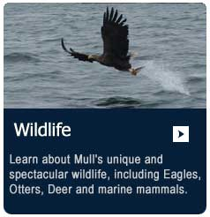 learn about Mull's spectacular wildlife
