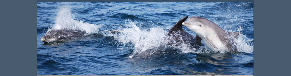 dolphins-2