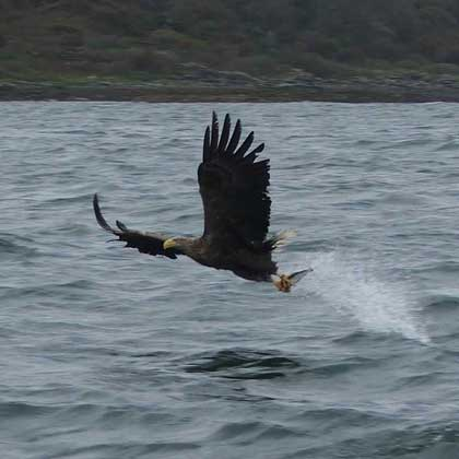 Wildlife on the Isle of Mull