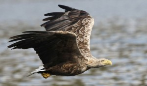 Winter Wildlife Trips and Tours
