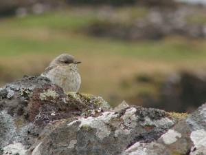 Moorland birds and wildlife